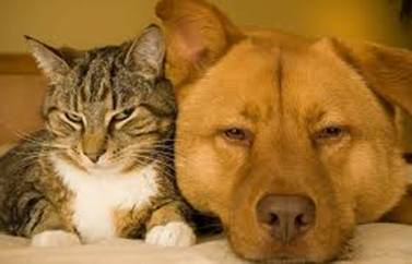 Xử trí khi bị chó, mèo cắn | Sở Y tế Nam Định